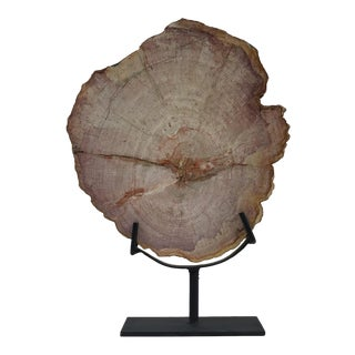 Petrified Wood Slab or Slice on Iron Display Stand For Sale