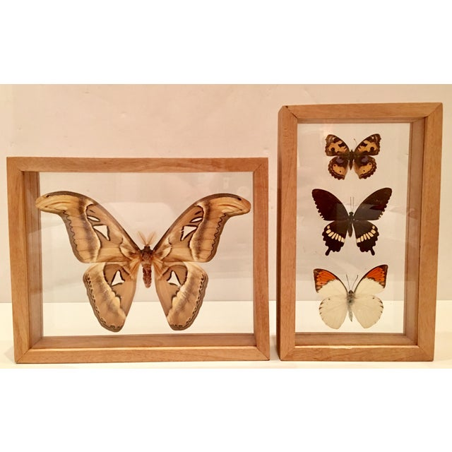 Shadow Box Framed Butterflies - A Pair - Image 2 of 7