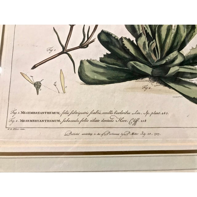 White 18th C. Botanical Engravings - Set of 4 For Sale - Image 8 of 10