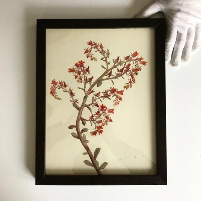 Boho Chic Framed Rock Plants - Set of 32 For Sale - Image 3 of 11