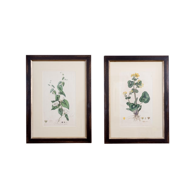 Antique French Botanicals- A Pair - Image 1 of 5