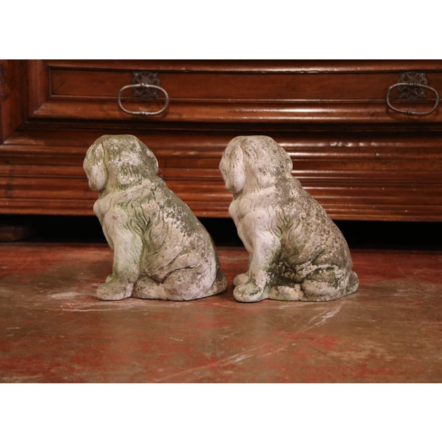 French Vintage Patinated Cast Stone Saint Bernard Dogs Sculptures - a Pair For Sale In Dallas - Image 6 of 9