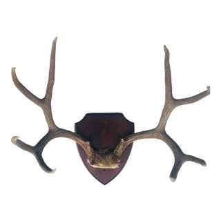 Vintage Mounted 8 Point Deer Antlers and Horns For Sale