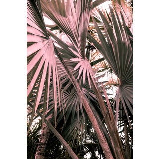 Special Edition Pink Palms I Fine Art Photo Print For Sale
