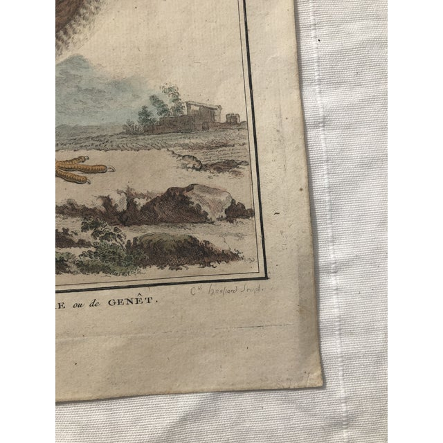 18th Century French Bird Engraving Signed by Jacques De Sève Featuring a Rale De Terre For Sale - Image 11 of 13
