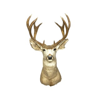 1950s Vintage Mid Century Buck Desert Mule Deer Taxidermy Shoulder Mount For Sale