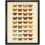 Image of Multi Butterflies Papilio Plate 2 For Sale
