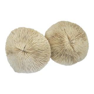 Natural Mushroom Cap Plate Coral Specimen, S/2 For Sale