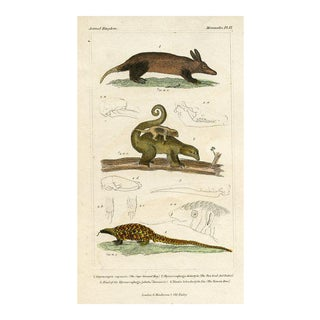 Ground Hog and Ant Eater, 1834 Engraving For Sale