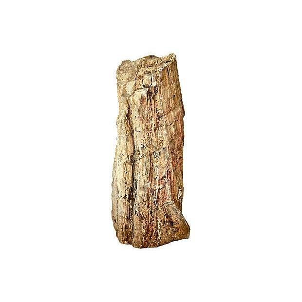 Petrified Wood Log - Image 6 of 7