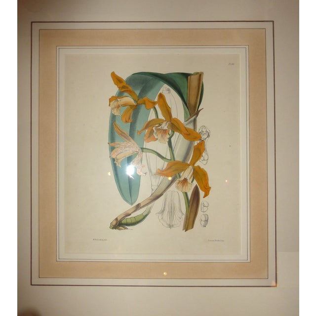 Hand Colored Orchid Engravings - Set of 4 - Image 3 of 5