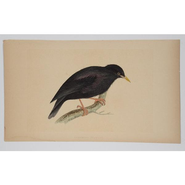 Antique Hand-Colored Aviary Wood Engravings - A Pair - Image 6 of 9