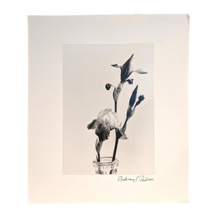 Black and White Iris Blooms Photograph For Sale
