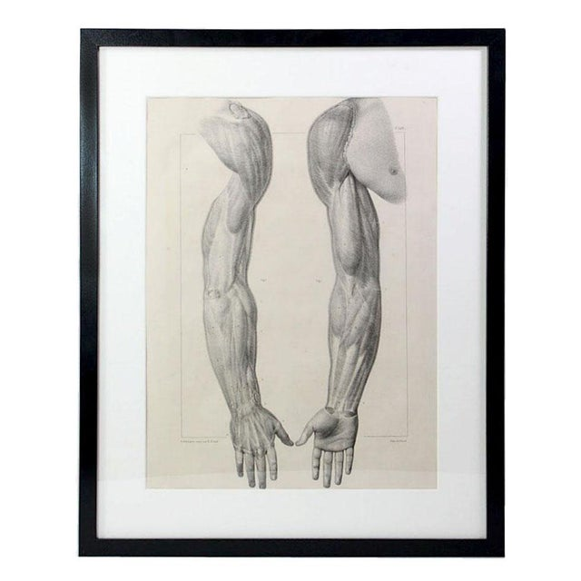 189 Year Old French Anatomy Muscular Arm Study Lithographic Prints - Framed For Sale - Image 4 of 4