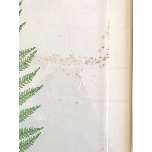 Mid 19th Century 19th Century Bradbury & Evans Nature Printed Fern Print For Sale - Image 5 of 8