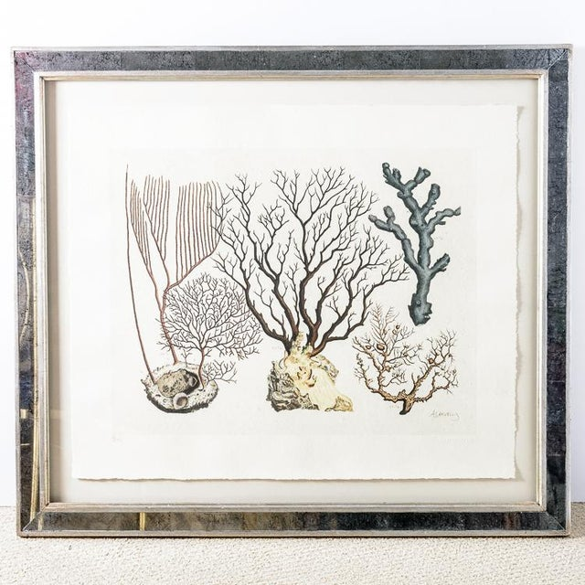 "Vintage Mirrored Framed 32"" by 28"" Colored Print With Coral Motifs by Trowbridge For Sale - Image 9 of 10"