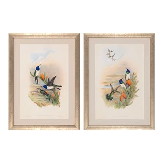 1990s John Gould Framed Prints, Hummingbird (Plates 69 & 68) - a Pair For Sale