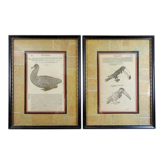 16th Century Bird Woodcuts - a Pair For Sale