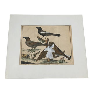 18th Century French Matted Bird Engraving by Martinet Featuring a Snow Pincer, a Senegalese Pincer and a Carolina Ortolan For Sale