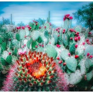 """Cactus Garden"" Contemporary Botanical Desert Landscape Photograph For Sale"