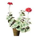 Image of The Green Vase Geranium Plant For Sale