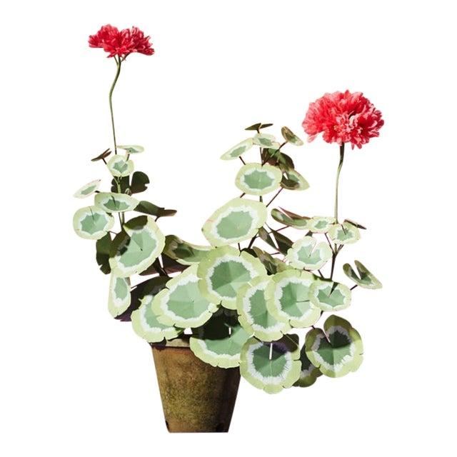 The Green Vase Geranium Plant For Sale