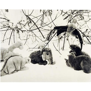 Prehistoric Ice Age Stuffed Animal Photograph For Sale