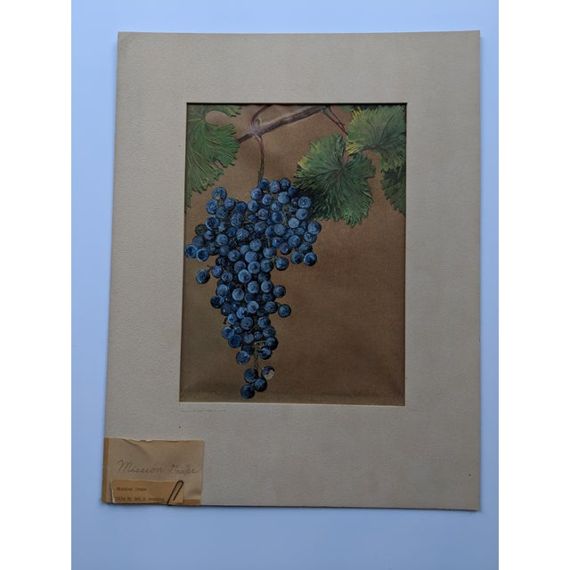Mission Grape Oil Painting For Sale In San Francisco - Image 6 of 6