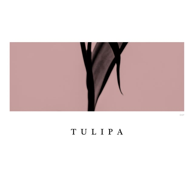 Contemporary Tulipa Poster For Sale - Image 3 of 5