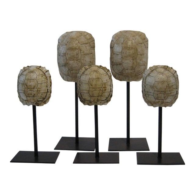 Mounted Resin Turtle Shells - Set of 5 - Image 1 of 5