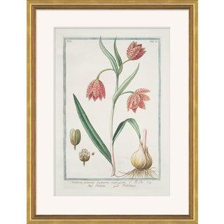 Hortus Romanus 1772-1793 XVII Framed Art Print For Sale