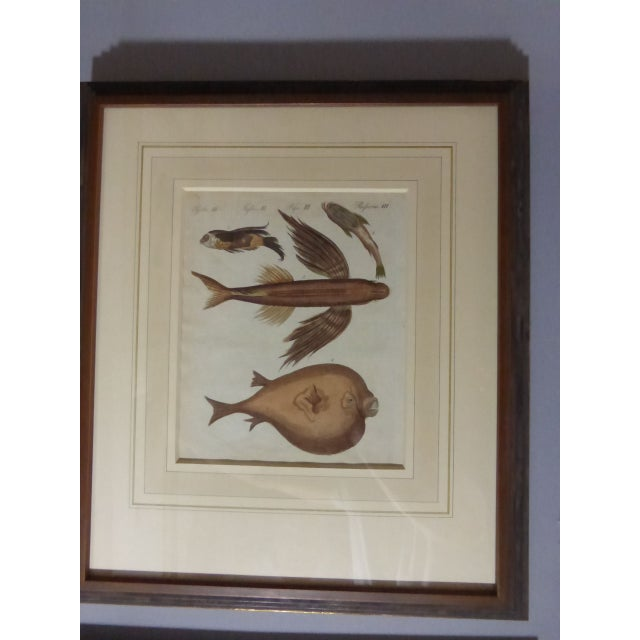 Antique Framed Nautical Engravings - Set of 6 - Image 3 of 8