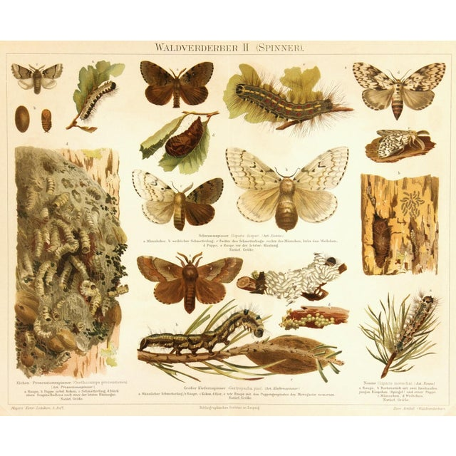 Antique Butterfly Print, 1894 - Image 1 of 3