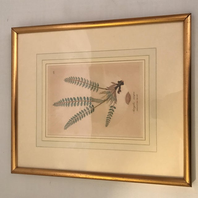 Anglo-Indian Framed Botanical Engravings - a Pair For Sale - Image 3 of 13