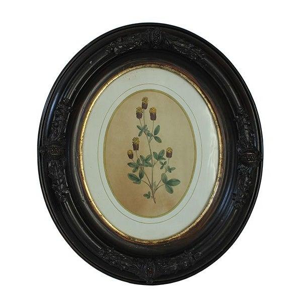 Civil War-Era Botanical Prints - Set of 4 - Image 1 of 7