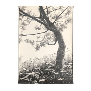 Daisies and Tree by Garo 1980s For Sale