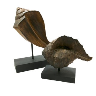 Wood Carved Shells on Museum Mount - A Pair For Sale