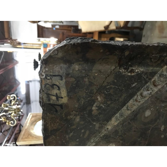 Moroccan Fossil Stone Marble Slab For Sale In Orlando - Image 6 of 8