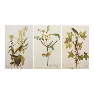 1966 Large Audubon Birds of America Lithographs - Set of 3