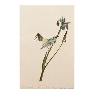 Yellow Warbler by John J. Audubon, American Classical Vintage Print For Sale
