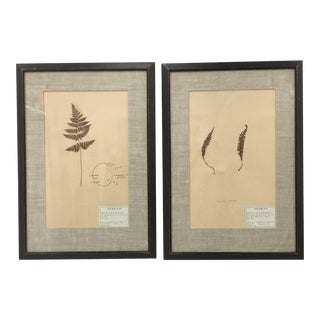 Early 20th Century French Framed Fern Botanical Specimens - A Pair For Sale