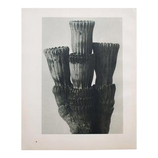Karl Blossfeldt Photogravure N3-4, 1935