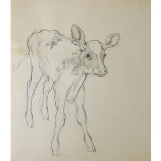 Pencil Study of Calf Drawing For Sale