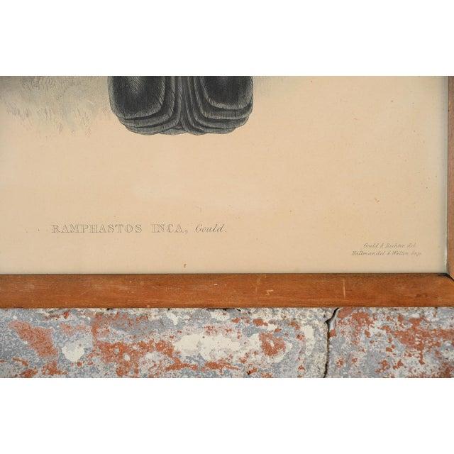 "John Gould ""Ramphatos Inca-Toucan"" Bird Litho. - Image 5 of 9"