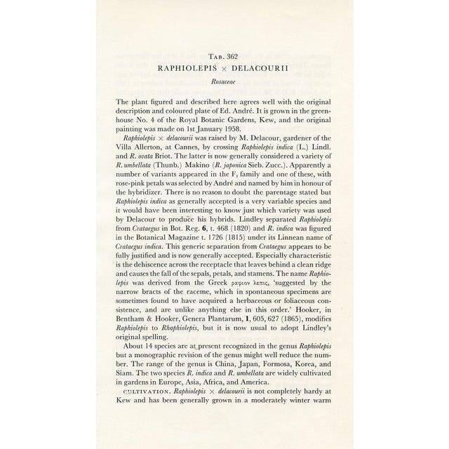 Vintage Curtis Botanical Prints - A Pair For Sale - Image 5 of 5