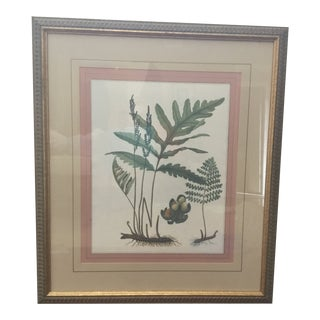 Large Soicher Marin Gallery Botanical Print For Sale