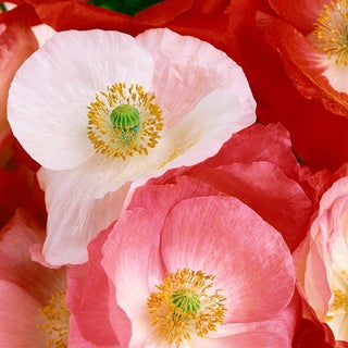 """Photographic Print, """"Poppies"""" by Mike Lorrig For Sale"""