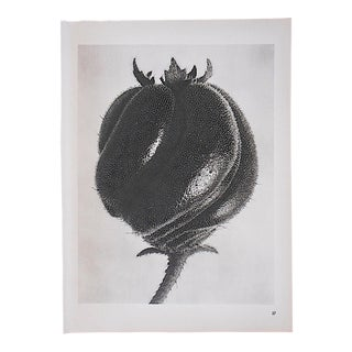 Vintage Botanical Photogravures by Karl Blossfeldt-Extreme Close-Ups C.1942-Printed One Side Only For Sale