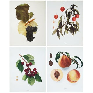 1900s Original Fruits of New York Photogravures by U. P. Hedrick - Set of 4 For Sale