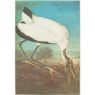 1966 Cottage Lithograph of Large Wood Ibis by John James Audubon